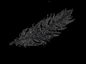 feathernobkrgnd